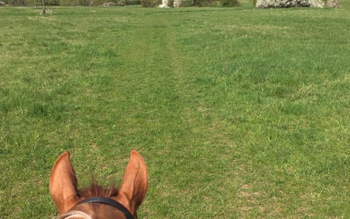 Off road hacking - Bridle ways | wood farm livery facilities | wood farm livery