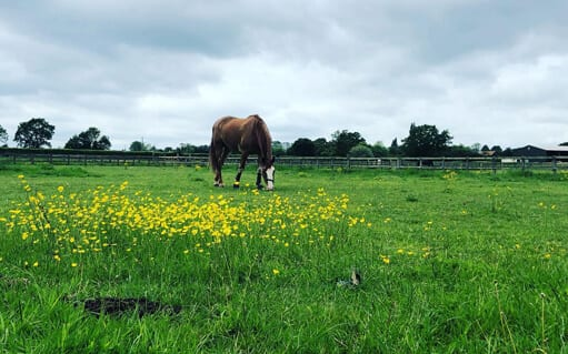 Paddock grazing1 | wood farm livery facilities | wood farm livery