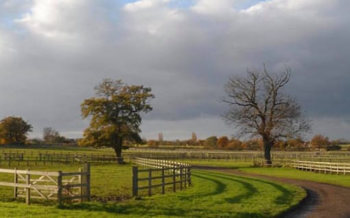 Paddock grazing3 | wood farm livery facilities | wood farm livery